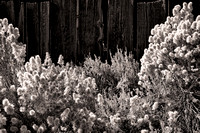 Bodie Flowers & Fence