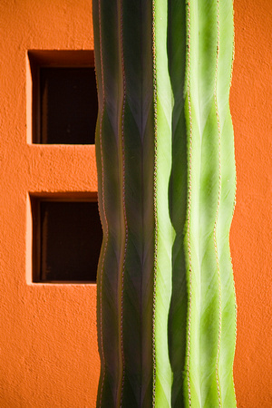Cactus and Orange Wall
