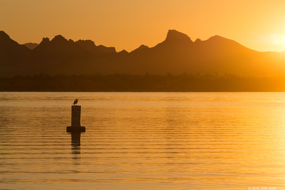 Lake Havasu Sunrise IV